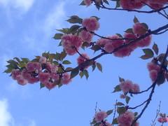 Alto e elevado,sob o azul do céu (Irene Sarranheira) Tags: cidade baby flores girl amor carinho rosa convento beleza mafra delicadeza passoapasso