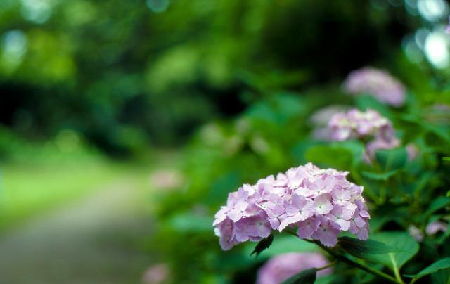 淡色の花々
