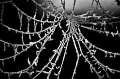 Frozen Web (Neil@photos dot com) Tags: pictures art photography spider frozen frost web sony ngc picture spooky cobweb photoart digitalphotography sonyalpha scenicsnotjustlandscapes landscapelovers neilbeevers
