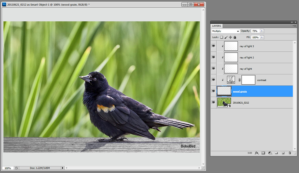 Red-winged Blackbird (again)