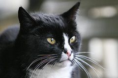 2008-03-20-10h29m14.IMG_4707e (A.J. Haverkamp) Tags: amsterdam cat zoo kat misc thenetherlands moos artis dierentuin canonef70200mmf28lisusmlens httpwwwartisnl