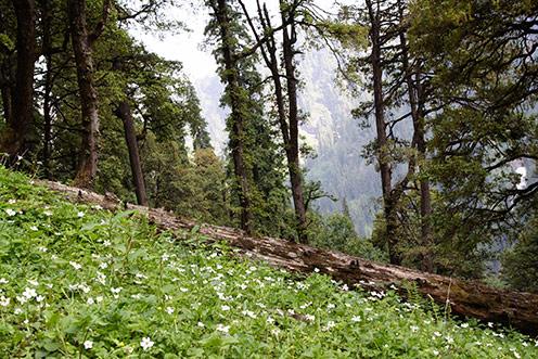 Flowers, Himachal