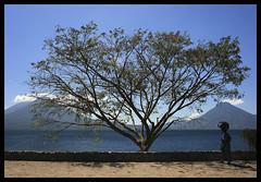 Pensamientos de un árbol... (anita gt) Tags: woman lake tree walking arbol lago mujer guatemala volcanoes panajachel volcanes caminando guate flickrgt spiritofphotography atitllán