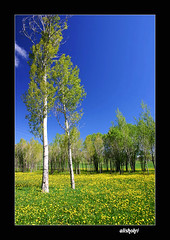 ( Ali Shokri / www.alishokri.com) Tags: tree beautiful bravo searchthebest iran quality azerbaijan loveit excellent photoart soe 07  themoulinrouge  naturesfinest goldenglobe littlestories supershot  flickrsbest spselection utatafeature abigfave shieldofexcellence platinumphoto anawesomeshot superaplus aplusphoto ultimateshot superbmasterpiece infinestyle treesubject diamondclassphotographer flickrdiamond megashot allin1 ysplix amazingamateur excellentphotographerawards superlativas eliteimages naturewatcher excapture flickrslegend betterthangood theperfectphotographer goldstaraward picswithsoul wwwalishokricom alishokri