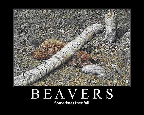 poor beaver :(