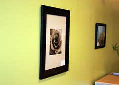 Framed Rose and Sunflower