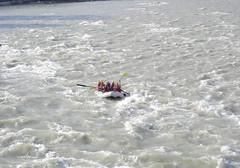 white water rafting ([s e l v i n]) Tags: travel india tourism holidays tour tourist adventure rafting himachal kullu whitewaterrafting himachalpradesh travelindia northindia touristspots beasriver selvin indiantourism indiantour himachaltourism