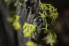 IMGP2264 (elvis_hitler2000) Tags: graveyard fence bc britishcolumbia lichen aficionados coalmont granitecreekgraveyard