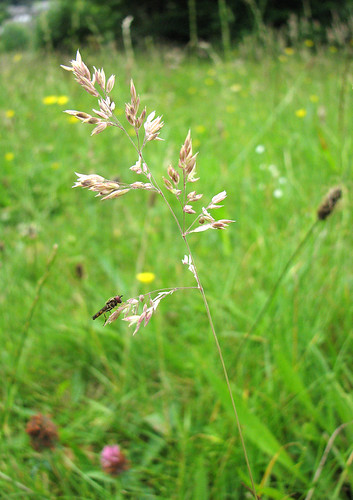 Grass with insect