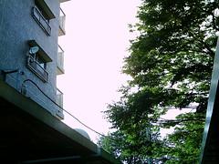 【写真】VQ3007で撮影した逆光