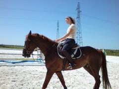 DSC00154 (jacaranda4) Tags: cheval mare du concours stallion foal cso poulain dressage jument coty complet elevage