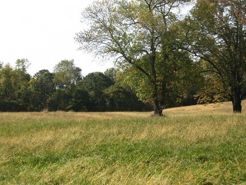 Empty Field