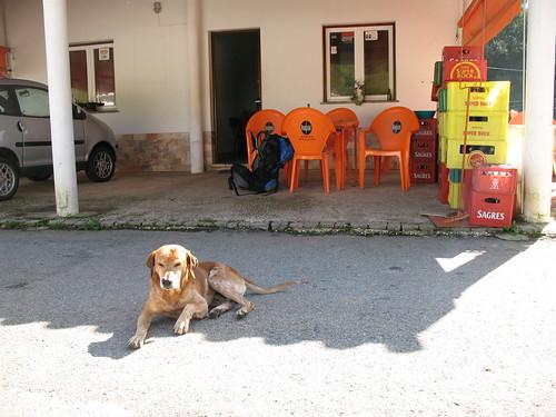 cão Tavares-Casa Pacheco-Romeiras
