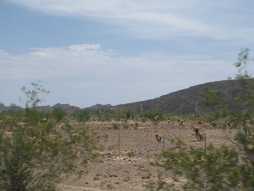 The California desert, can you see the Saguaros?