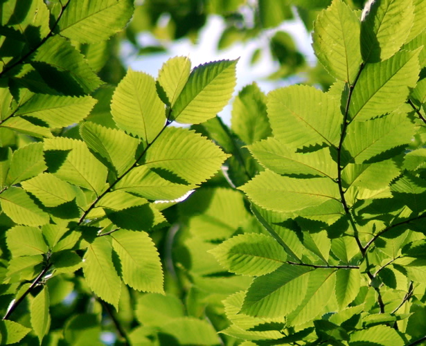 082308_leaves_enhanced_2_twice