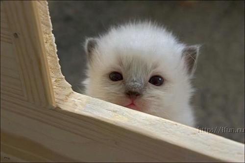 kitties_2