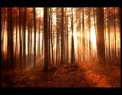 Nimrod ( Damona-Art ..`..`) Tags: trees light red sunlight nikon raw explore sunrays forests sunbeams bookofsecrets impressedbeauty thesecretlifeoftrees vosplusbellesphotos