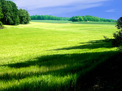 Landscape - Green  View, Halla (Olof S) Tags: county summer wallpaper sky cloud tree verde green nature field grass skyline rural forest landscape photography landscapes countryside photo nice interesting cornfield nikon scenery europe view sweden schweden country natur picture straw himmel natura swedish ciel skog land vegetation environment nordic sverige pastoral scandinavia paysage landschaft wald foret paesaggio suede suecia srmland ker landskap manzara sauvage halla svezia szwecja sdermanland e3500  sdesflt feldt colourartaward enbrabild colorfullaward kornfeldt