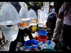 Captured life(s) !!! (Aparna Bhattacharya) Tags: street pet market sony kolkata dsc h9 kwspetmarket070908 gallif