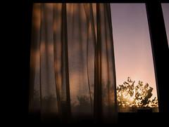 (: metamorfosis :) Tags: roma sol cortina contraluz atardecer ventana hotel rboles italia arbres silueta ocaso sombras ombres contrallum capvespre