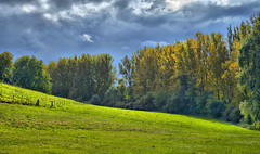 High Dynamic Nature (Syn-ST-Sia) Tags: trees nature outdoor natur bume hdr otw hegau mycameraneverlies