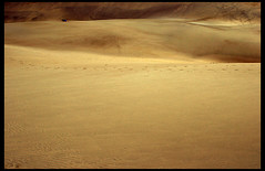 Golden Sand (Katka S.) Tags: sea nature gold islands spain sand desert erasmus dune wave canarias atlantic espana gran canary 2008 islas canaria dunas maspalomas llp aplusphoto fotocompetition fotocompetitionbronze