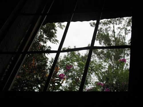 Lisandro-window-flowers