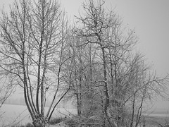 Snow (lupin 3 !!!(no video)!!!) Tags: winter italy parco mountain gelo alberi europa italia natura casio cielo pace inverno bergamo casioexilim montagna bianco lombardia 2009 freddo capodanno nord gennaio treviglio impronte 3 brignano casioexz5 lupin3 casioexilimz5 chenevicata giovannitoma