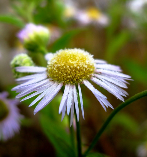 frosty flowers...