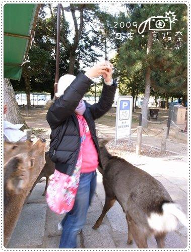 奈良的鹿 (4)