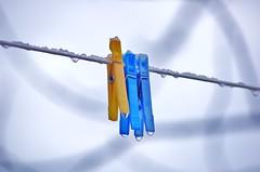 Trio (lasab8) Tags: blue yellow jaune hiver fil bleu linge froid givre objets pingle petiteshistoiressansparoles