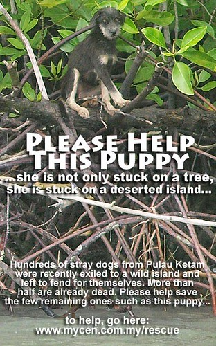 Pulau Ketam Dog Rescue Mission