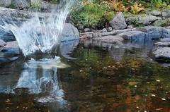 Splooosh! (.*~.C._M.o.t.i.o.n.s.~*.) Tags: autumn canada nature water rock forest reflections river fun rocks sink sound splash splish skippingrocks throwingrocks