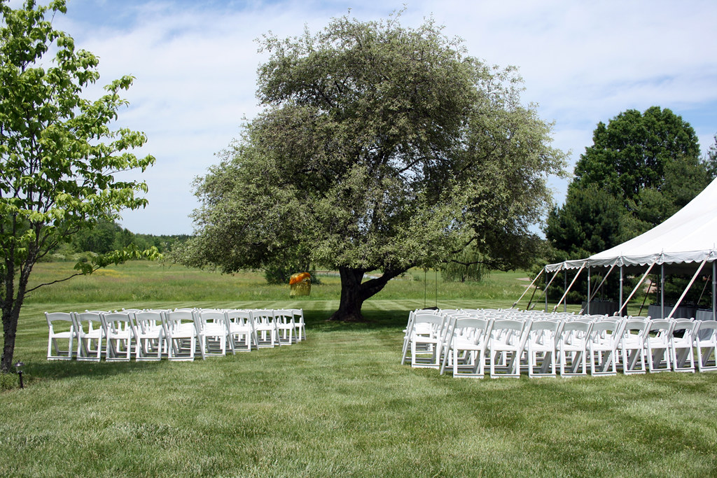 treechairs