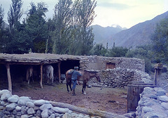 Beyachee, Pakistan (Noorkhan) Tags: pakistan mountains khan areas northern mohammad noor gilgit chitral gupis karakoraam