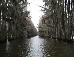 (austin carder) Tags: light lake cold reflection green canon moss texas gray spanish cypress desolate caddo sd750