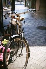19040037 (the-flickman) Tags:   holga135