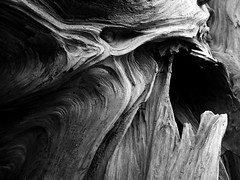 Driftwood . 2 (Steven Schnoor) Tags: driftwood detail wood bw blackandwhite mono monochrome patterns grain woodgrain schnoor coast beach thebay washington washingtonstate texture art hoquiam graysharbor bay stevenschnoor organic black nature outdoor northwest pacific pacificnorthwest pnw simplelogic stilllife usa unitedstates washingtoncoast westernwashington