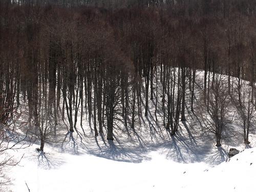Ombre d'inverno a Camposecco