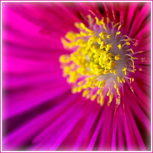 Botanical Bokeh