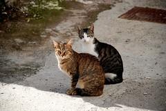DE LADO... (ABUELA PINOCHO ) Tags: gatos dos gato pictureperfect callejero sentados delado lolcats bestofcats velvetpaws isawyoufirst heartaward a3b furrycatfriend