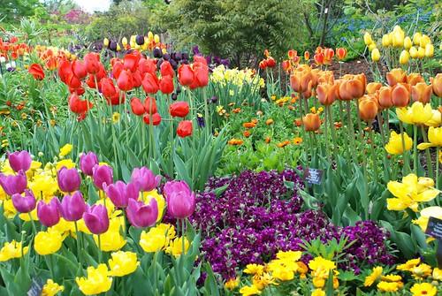 Sensory Garden: Color