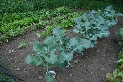 dad's garden 3