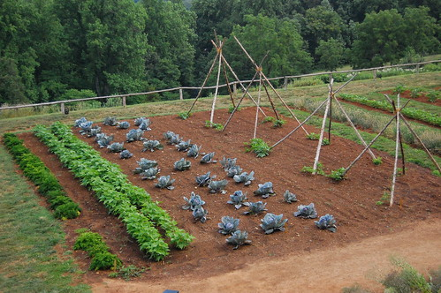 vegetable veggie garden rows