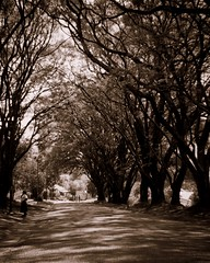 Avenue, Pilgrim's Rest (Ottie) Tags: bw film southafrica avenue mpumalanga goldrush ilfordfp4 boxbrownie pilgrimsrest oldminingtown interestingness94 i500 explore26jun2008