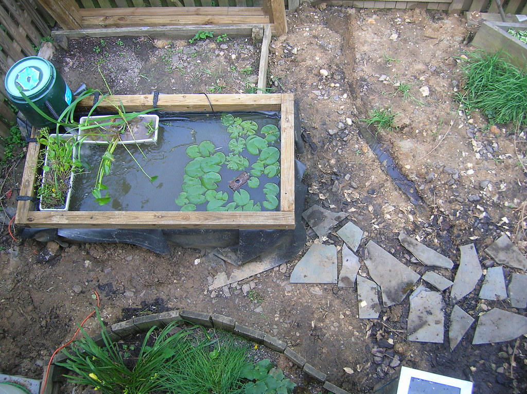 Pond with new plants