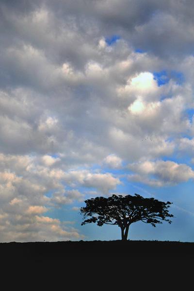 Tree-Shadow