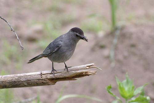 我的鳥紀錄