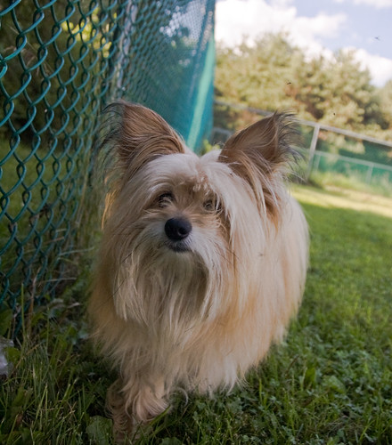 DCHS Dogs 07-24-1207