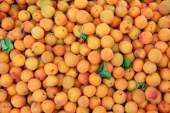 Help Yourself - Its Khobani (Monsoon Lover) Tags: india color fruits flickr explore apricot kashmir kargil antioxidant sudipmonsoonlover sudipguharay khobani ladakhkashmir 5thaugustexplore464